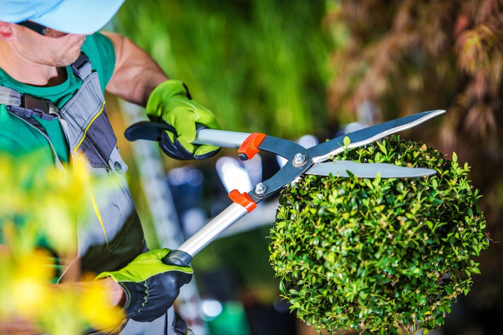 خدمات باغبانی، یک ایده خوب و شاد برای کسب و کار