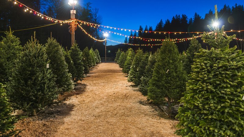 درخت تزئینی کریسمس