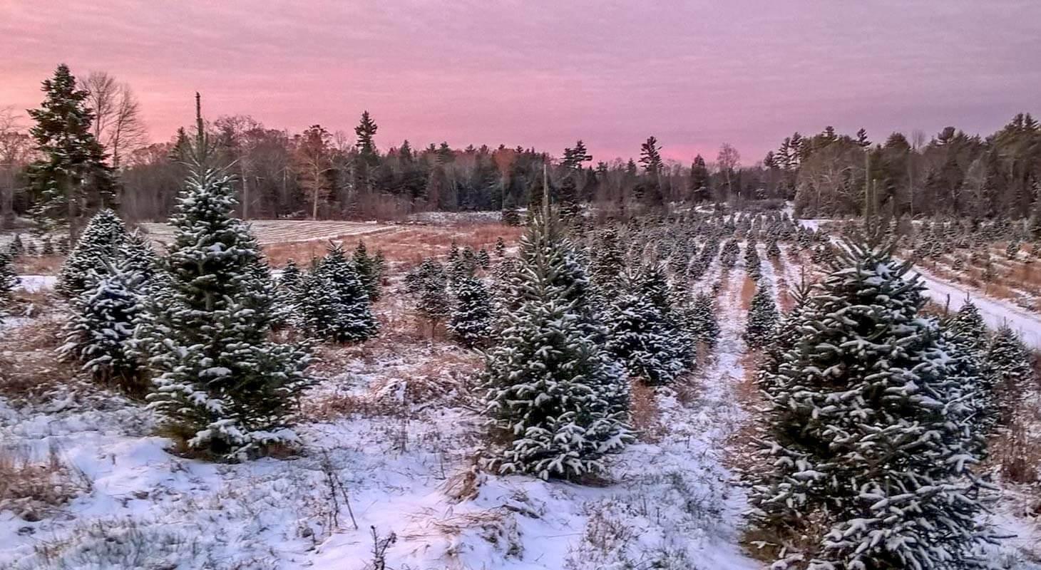 برف در کریسمس