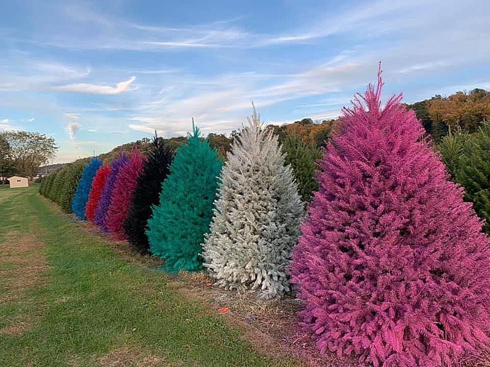 درخت رنگی کریسمس