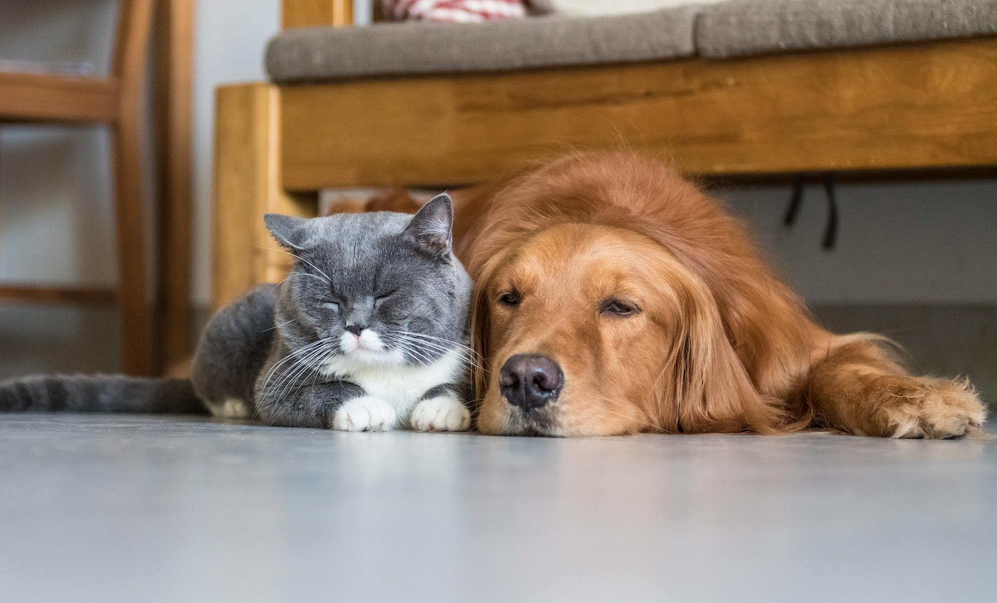 نگهداری از سگ و گربه