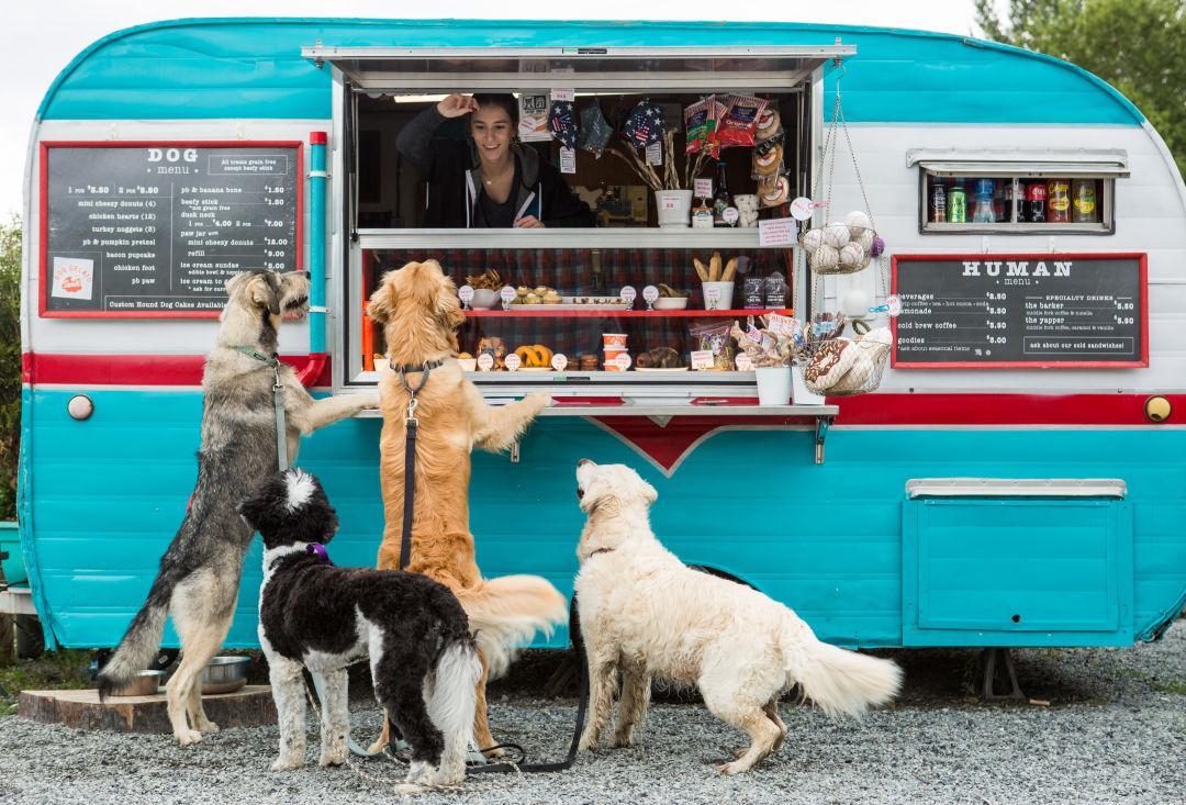 شیرینی فروشی مخصوص حیوانات