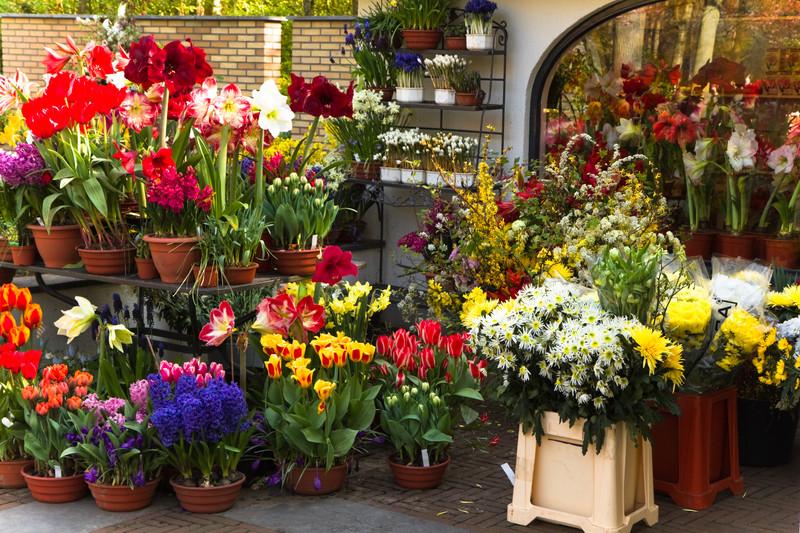 احداث گلخانه کسب و کاری سودآور