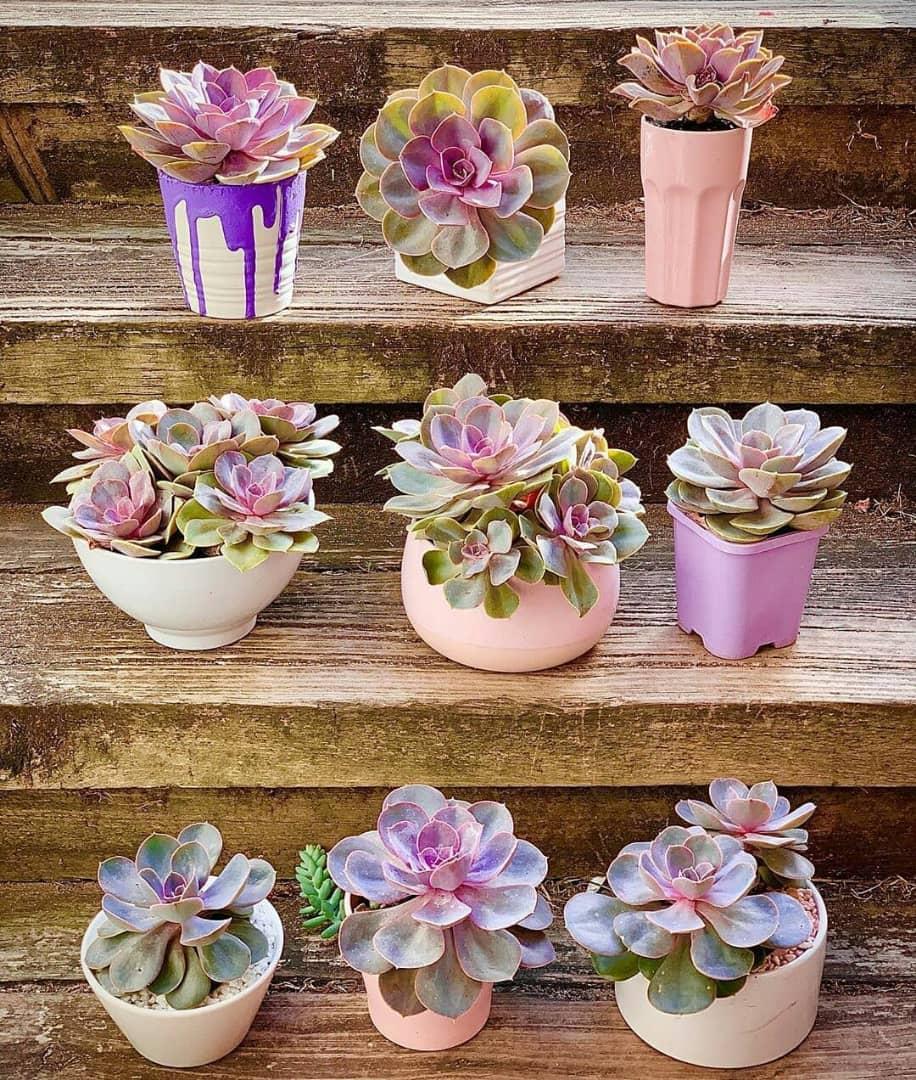 Growing Ornamental Cactus