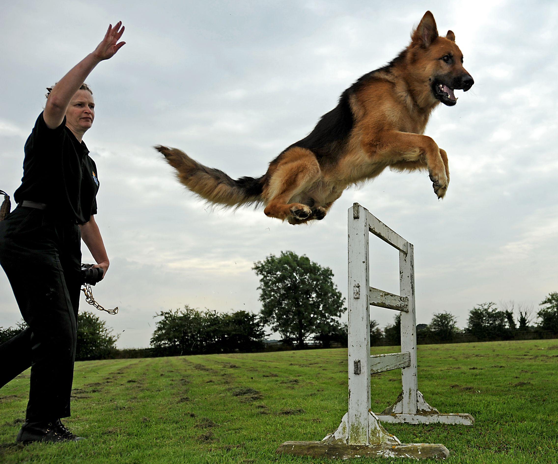 کسب و کار آموزش سگ