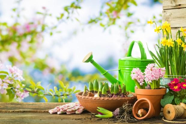 خدمات باغبانی مخصوص
